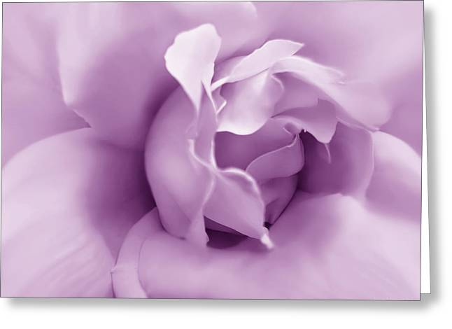 Soft Violet Rose Flower Greeting Card by Jennie Marie Schell
