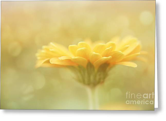 Soft Yellow Gerbera Greeting Card by LHJB Photography