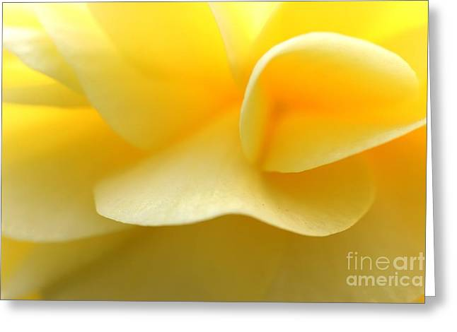 Soft Yellow Greeting Card by Tap On Photo