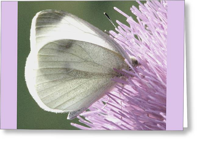 Softly Into Summer Greeting Card