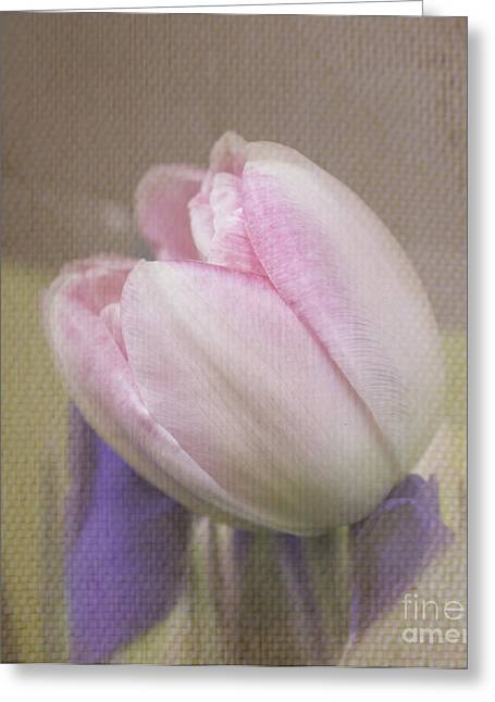 Softly Tulip Greeting Card by Arlene Carmel