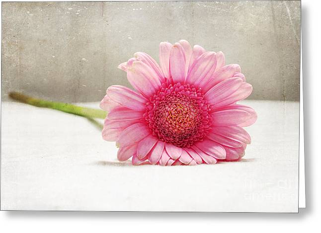 Softness In Pink Greeting Card by Randi Grace Nilsberg