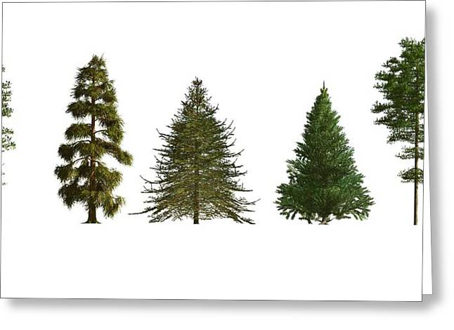 Softwood Trees Greeting Card