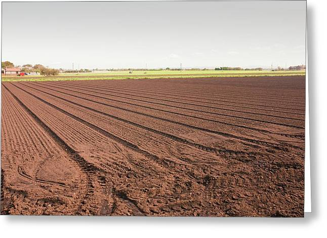 Soil On A Farm On The Lancashire Mossland Greeting Card by Ashley Cooper