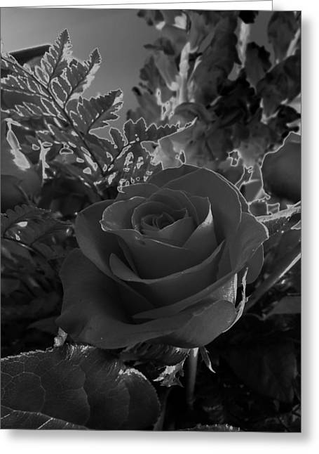 Solarized Rose Greeting Card by Scott Kingery