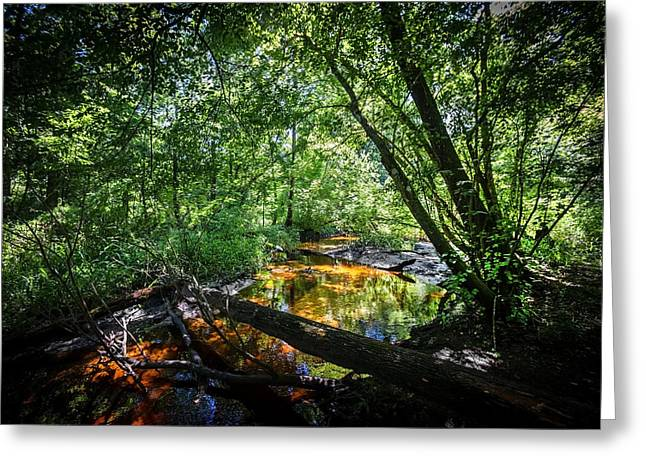 Soldiers Creek Seminole County Florida Environmental Center Along The Florida Trail  Greeting Card by Rich Franco