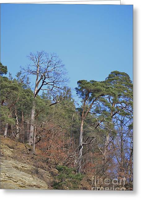 Greeting Card featuring the photograph Solid Ground by Felicia Tica