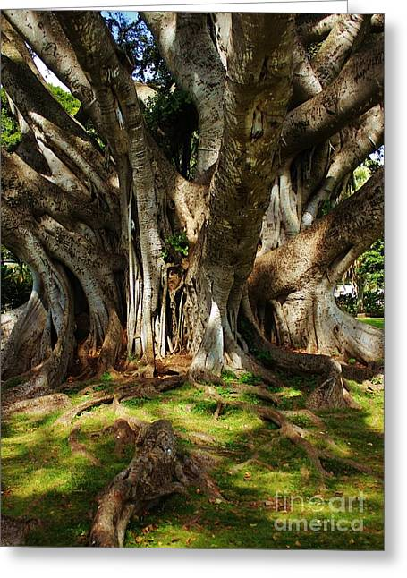 Solidly Rooted Greeting Card