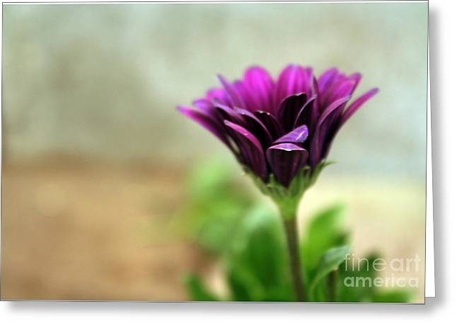 Greeting Card featuring the photograph Solitaire by Chris Anderson