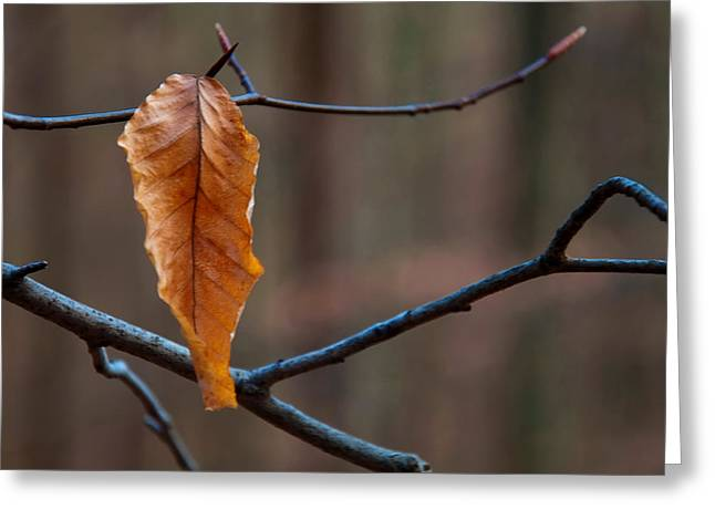 Solitary Leaf Greeting Card by Chris Flees