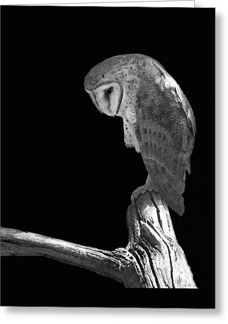 Solitary Owl Greeting Card by Suzanne Gaff