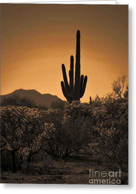Solitary Saguaro Greeting Card