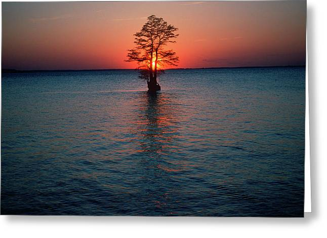 Solitary Tree In The James River Greeting Card