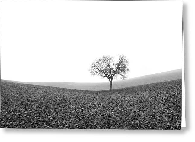 Solitary Tree In Winter. Auvergne. France Greeting Card