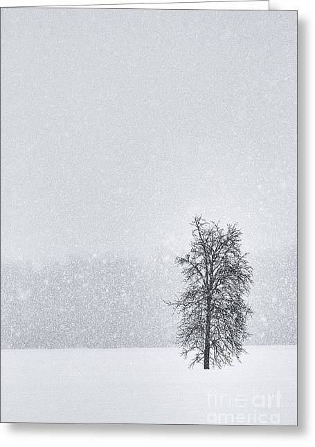 Solitude II Greeting Card by Michele Steffey