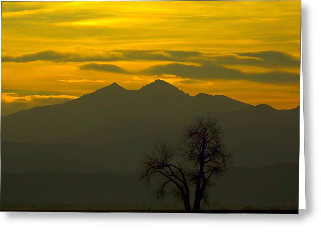 Solo Tree With Longs Peak Greeting Card by Rebecca Adams