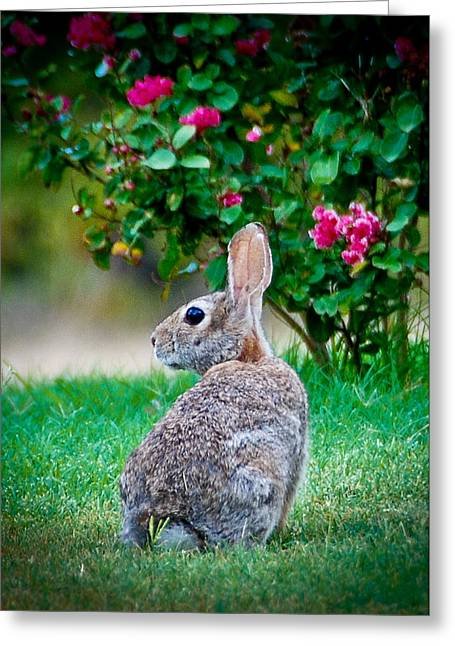 Some Bunny Loves You Greeting Card by Dee Dee  Whittle