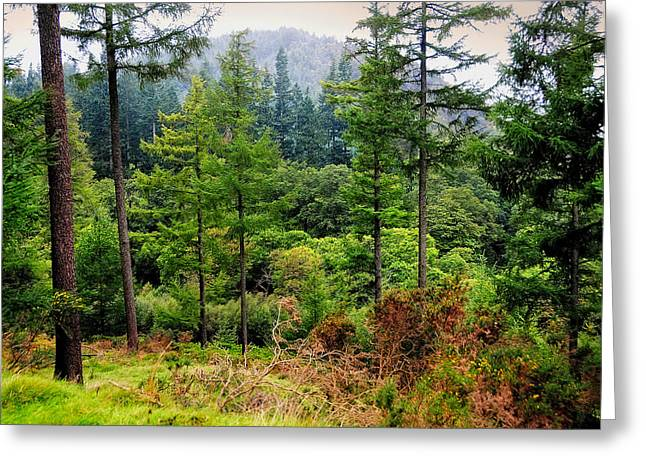 Somewhere In The Forest Over Upper Lake. Glendalough. Ireland Greeting Card by Jenny Rainbow