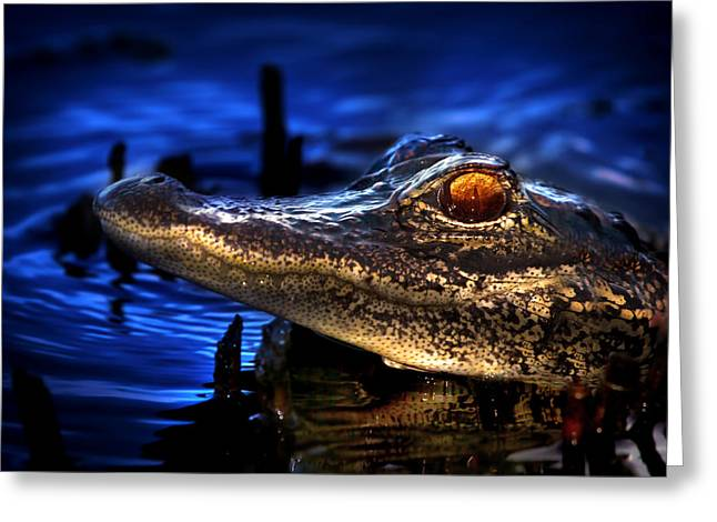 Son Of A Gator Greeting Card by Mark Andrew Thomas