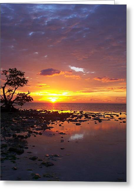 Son rise photograph by tom welsch son rise greeting card by tom welsch m4hsunfo Images