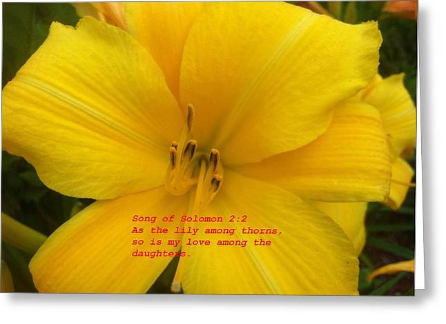 Greeting Card featuring the photograph Song Of Solomon 2  2 by Saribelle Rodriguez