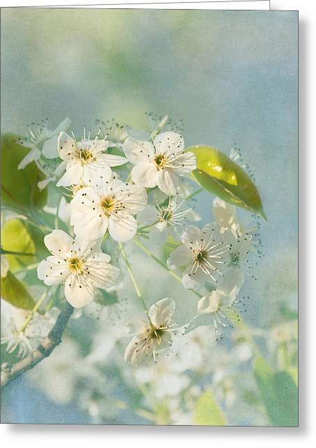 Song Of Spring Greeting Card by Kim Hojnacki