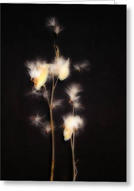 Song Of The Milkweed Greeting Card by Gothicrow Images
