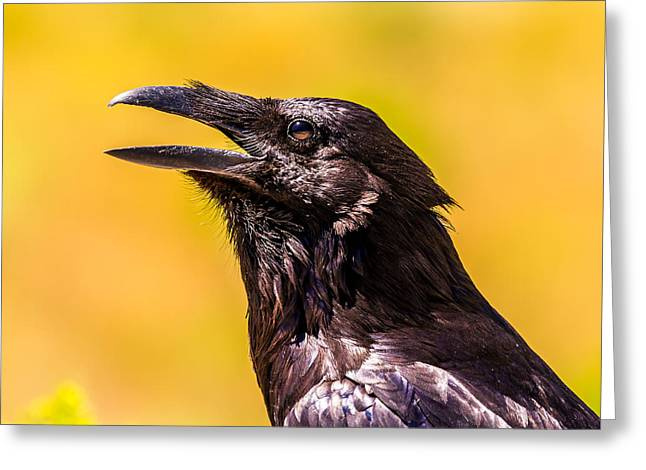 Song Of The Raven Greeting Card