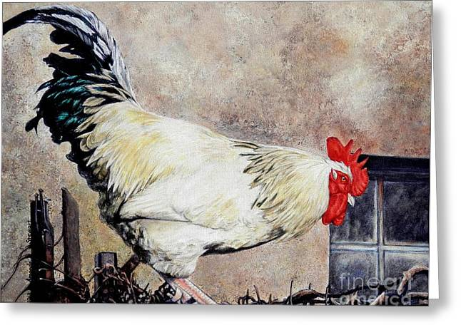 Sonoma Rooster Greeting Card by Amanda Hukill
