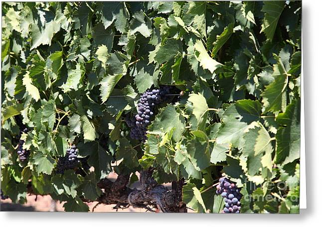 Sonoma Vineyards In The Sonoma California Wine Country 5d24489 Greeting Card