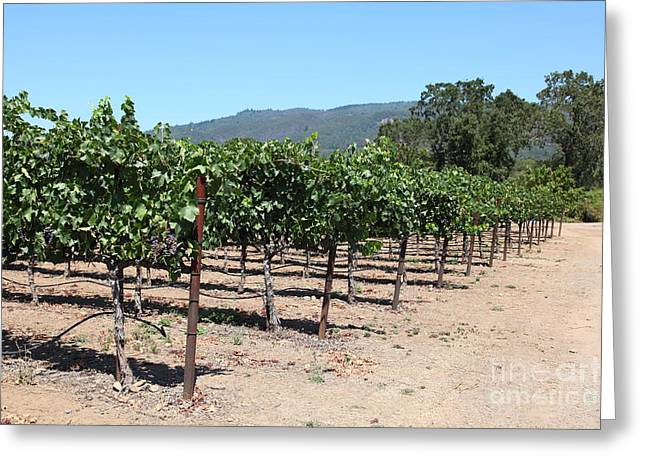 Sonoma Vineyards In The Sonoma California Wine Country 5d24492 Greeting Card