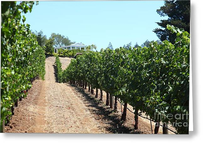 Sonoma Vineyards In The Sonoma California Wine Country 5d24507 Greeting Card
