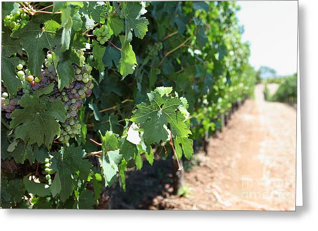 Sonoma Vineyards In The Sonoma California Wine Country 5d24510 Greeting Card
