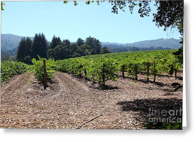 Sonoma Vineyards In The Sonoma California Wine Country 5d24511 Greeting Card