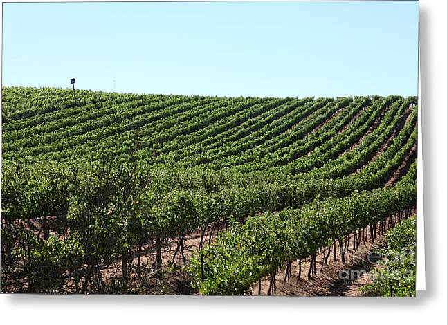Sonoma Vineyards In The Sonoma California Wine Country 5d24588 Greeting Card by Wingsdomain Art and Photography