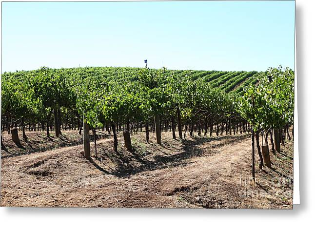 Sonoma Vineyards In The Sonoma California Wine Country 5d24598 Greeting Card by Wingsdomain Art and Photography