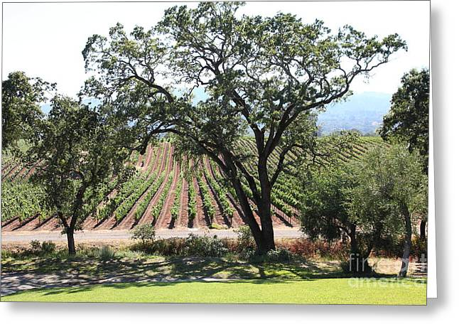 Sonoma Vineyards In The Sonoma California Wine Country 5d24620 Greeting Card by Wingsdomain Art and Photography