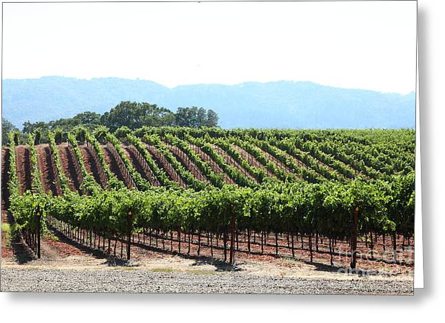 Sonoma Vineyards In The Sonoma California Wine Country 5d24625 Greeting Card by Wingsdomain Art and Photography