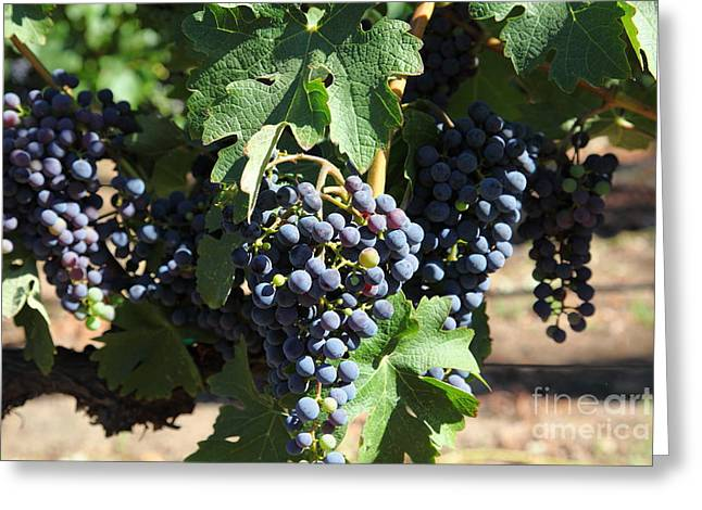Sonoma Vineyards In The Sonoma California Wine Country 5d24630 Greeting Card by Wingsdomain Art and Photography