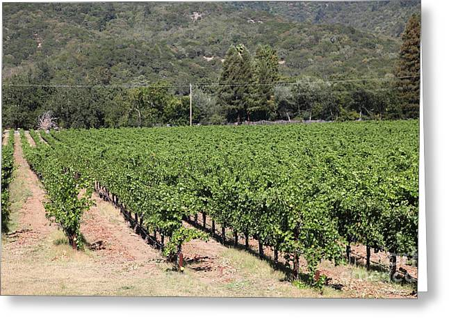 Sonoma Vineyards In The Sonoma California Wine Country 5d24632 Greeting Card by Wingsdomain Art and Photography