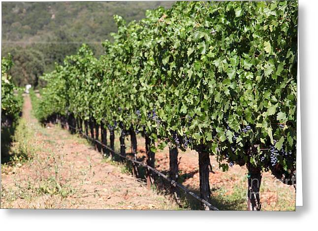 Sonoma Vineyards In The Sonoma California Wine Country 5d24633 Greeting Card by Wingsdomain Art and Photography
