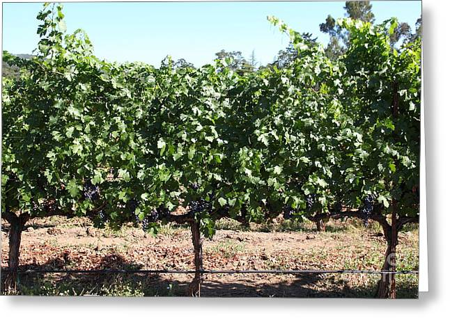 Sonoma Vineyards In The Sonoma California Wine Country 5d24636 Greeting Card by Wingsdomain Art and Photography