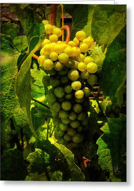 Sonoma Wine Grapes 001 Greeting Card by Lance Vaughn