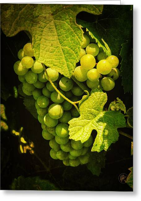 Sonoma Wine Grapes 002 Greeting Card by Lance Vaughn