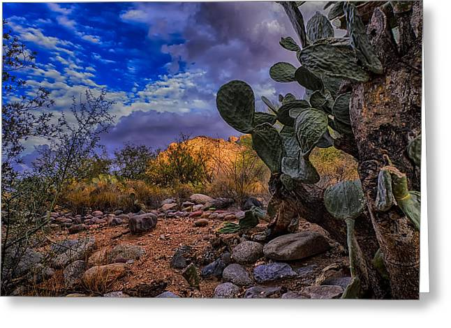 Sonoran Desert 54 Greeting Card