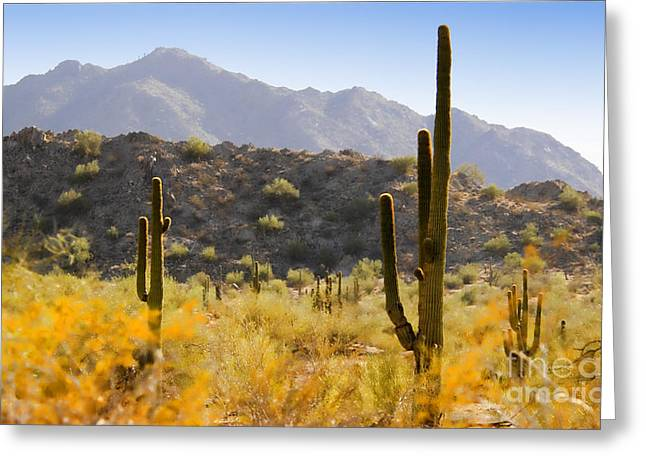 Sonoran Desert Beauty Greeting Card by Betty LaRue
