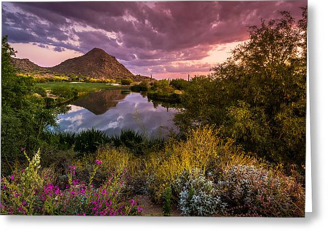 Sonoran Desert Spring Bloom Sunset  Greeting Card by Scott McGuire
