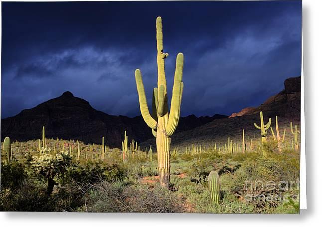 Sonoran Desert Symphony Of Light 2 Greeting Card
