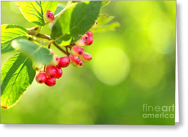 Soon Greeting Card by Beve Brown-Clark Photography