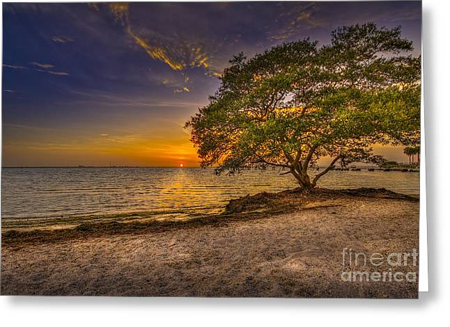 Soothing Light Greeting Card by Marvin Spates